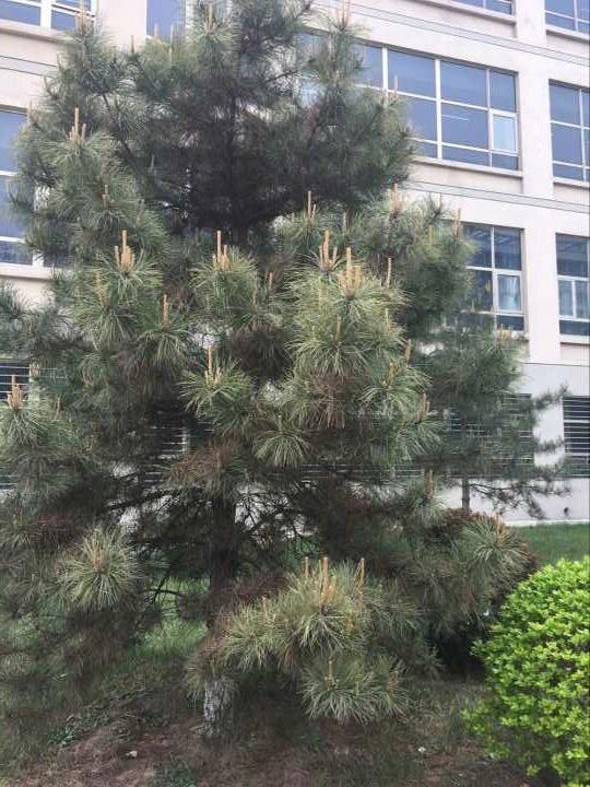 学校的一棵树,咋感觉它在向我竖中指呢,看不起我。