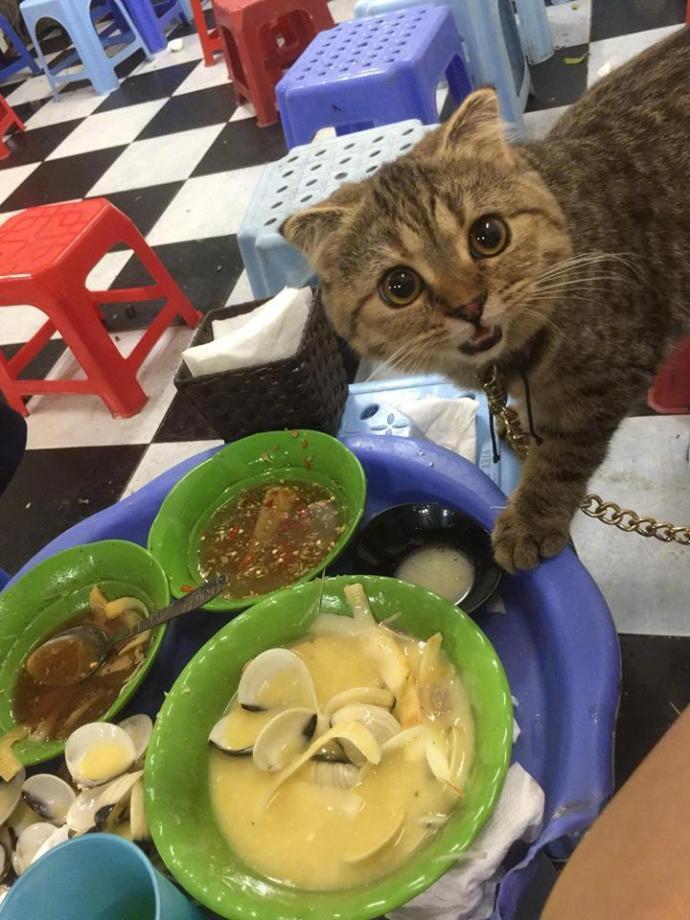 猫:这个我可以吃吗?