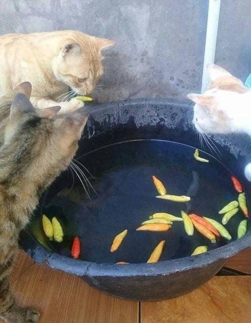 好奇心害死猫