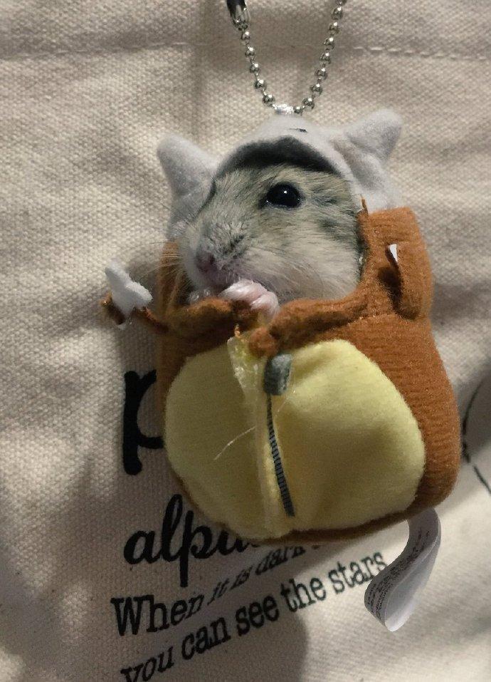 推主_o_mimimi买的皮卡丘睡袋。。。带回家后被人给强行霸占了。。。