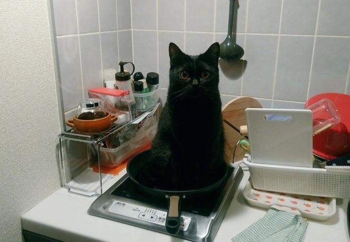 """岛国一妹子早上起来,随口说了句""""肚子好饿"""",转眼家里猫咪就不见了…找到厨房一看,扑通一声就跪下了!"""