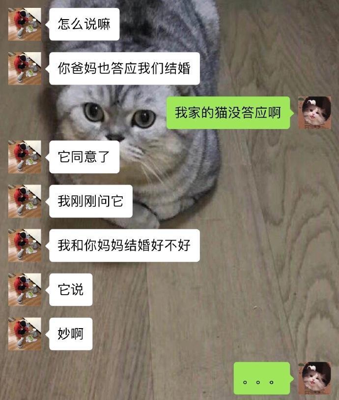 猫:喵喵喵???