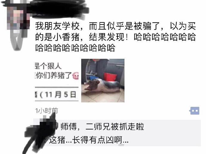 因为在宿舍养猪被通报批评哈哈哈哈哈