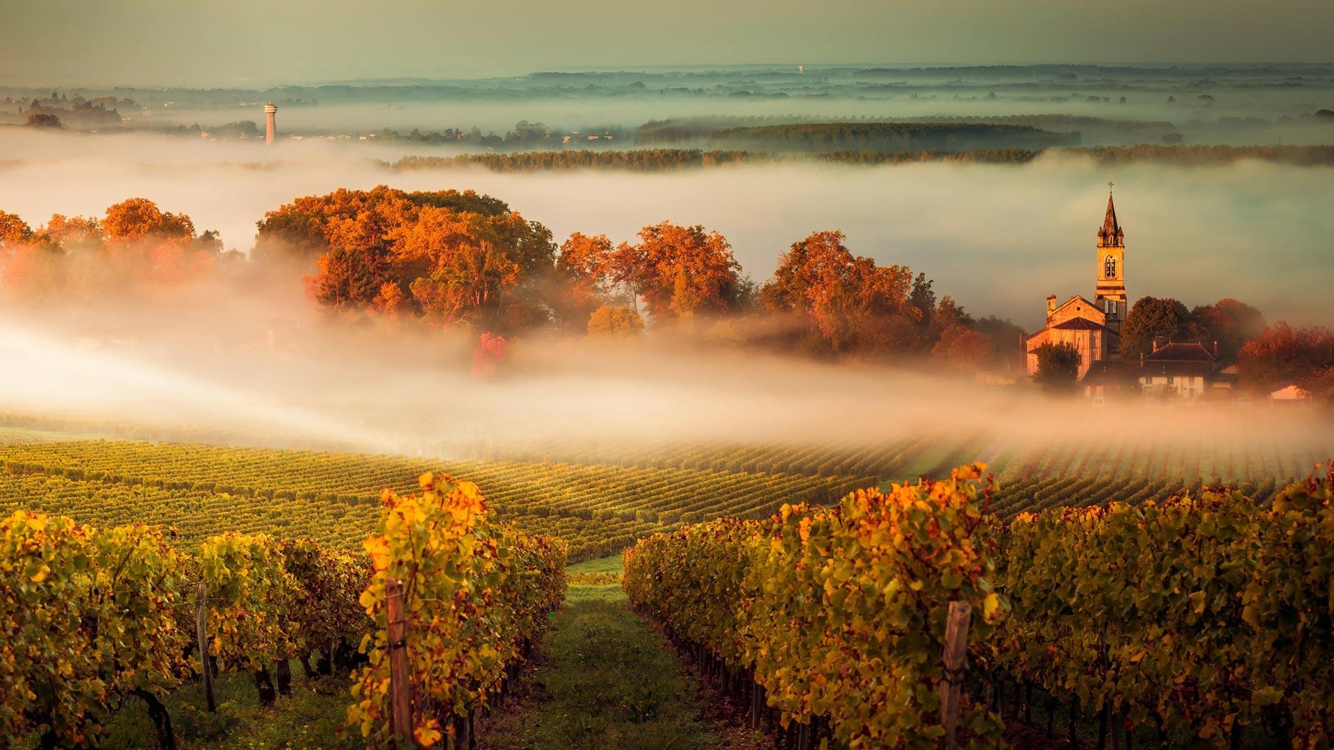 波尔多葡萄园,法国