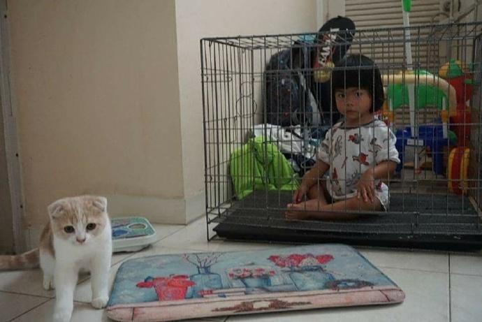 如何让熊孩子和猫和平共处?泰国网友是这么干的……