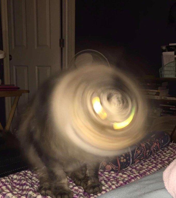 猫咪钻头哈哈哈哈可爱!