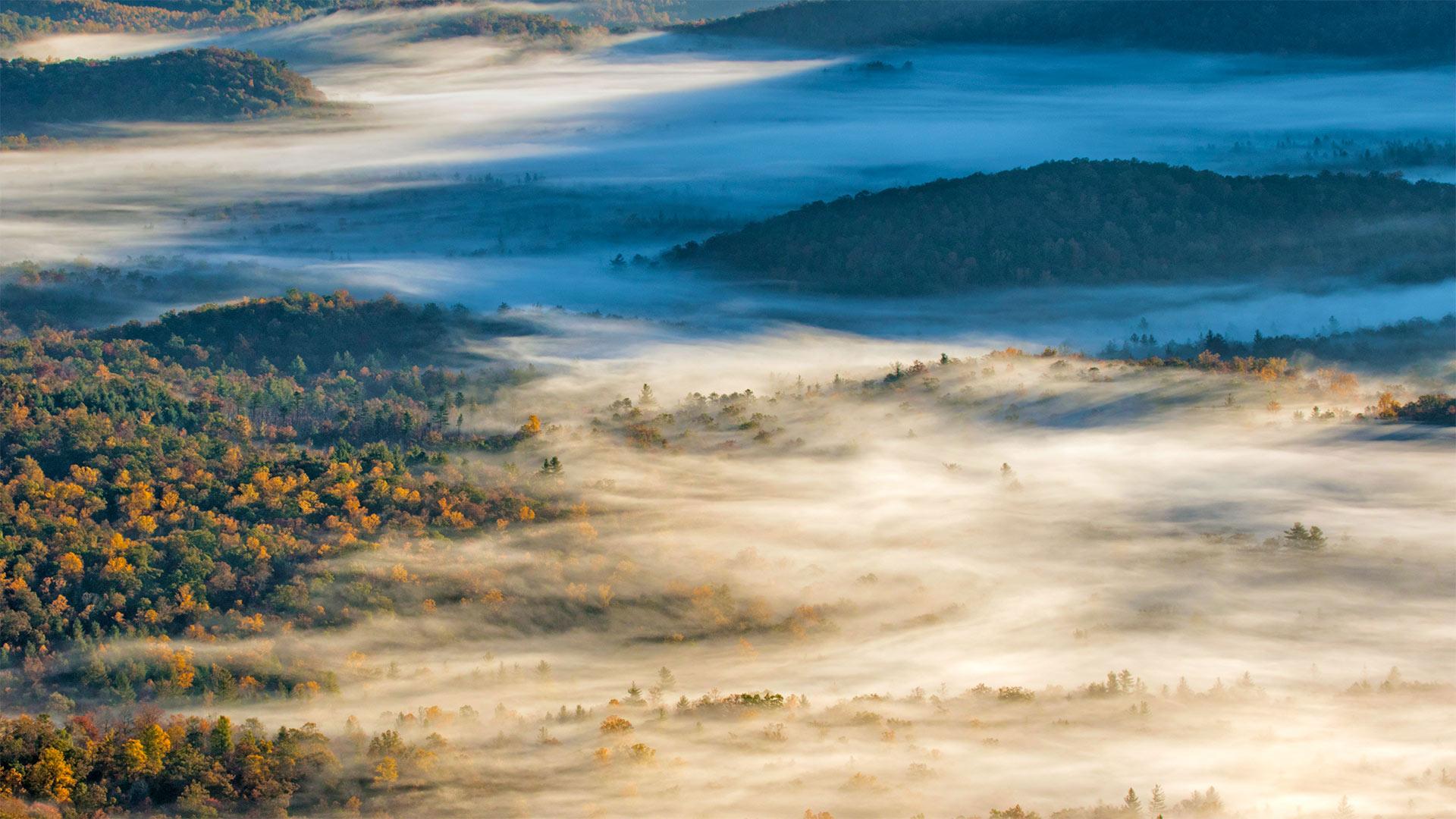 布里瓦德附近的皮斯加国家森林,北卡罗来纳州