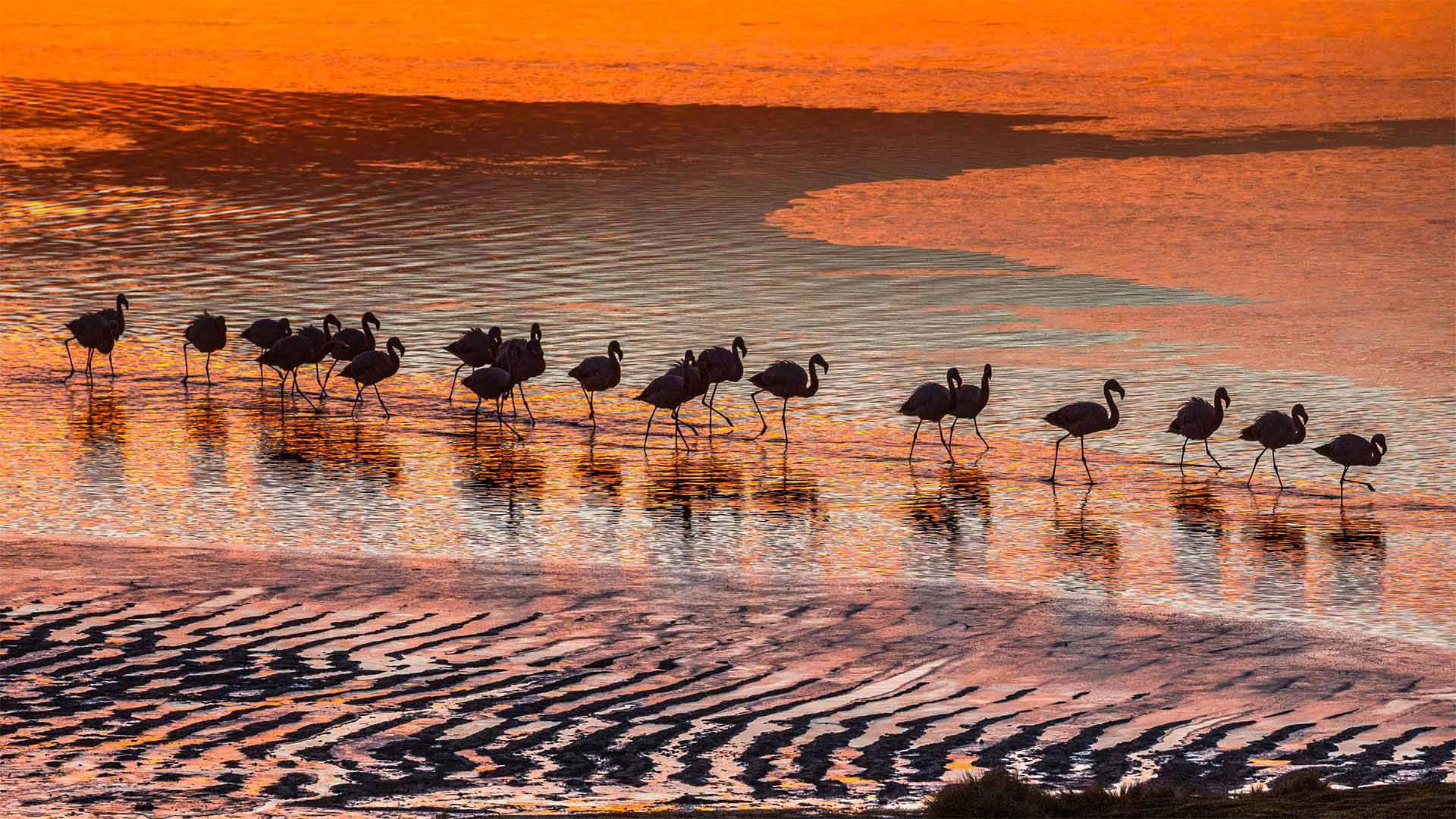 爱德阿都·阿瓦罗·安第斯国家保护区内的火烈鸟,玻利维亚