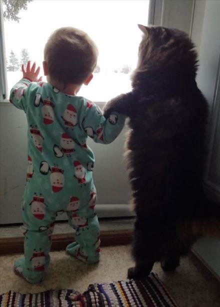 饲主buzzmag家的女儿已经出生9个月了,因为每天都和家里猫咪玩耍,所以她们之间渐渐的产生了深厚的友谊,特别是最近主人发现,她们两个居然手牵着手站在窗子前,一边用喵语聊天一边欣赏外面的风景…