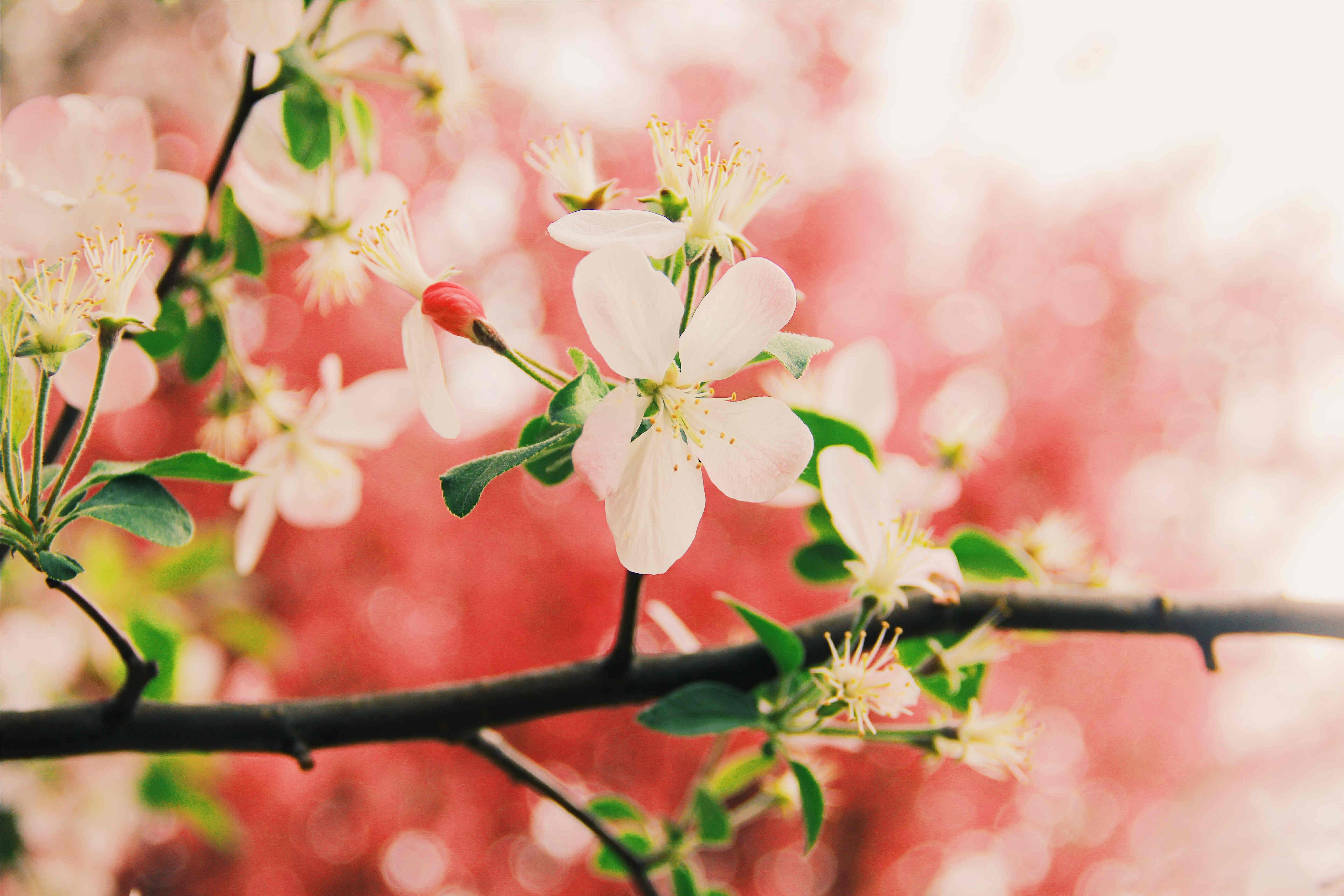 爱,是一件非专业的事情,不是本事,不是能力,是花木那样的生长,有一份对光阴和季节的钟情和执着。一定要,爱着点什么,它让我们变得坚韧,宽容,充盈。业余的,爱着。