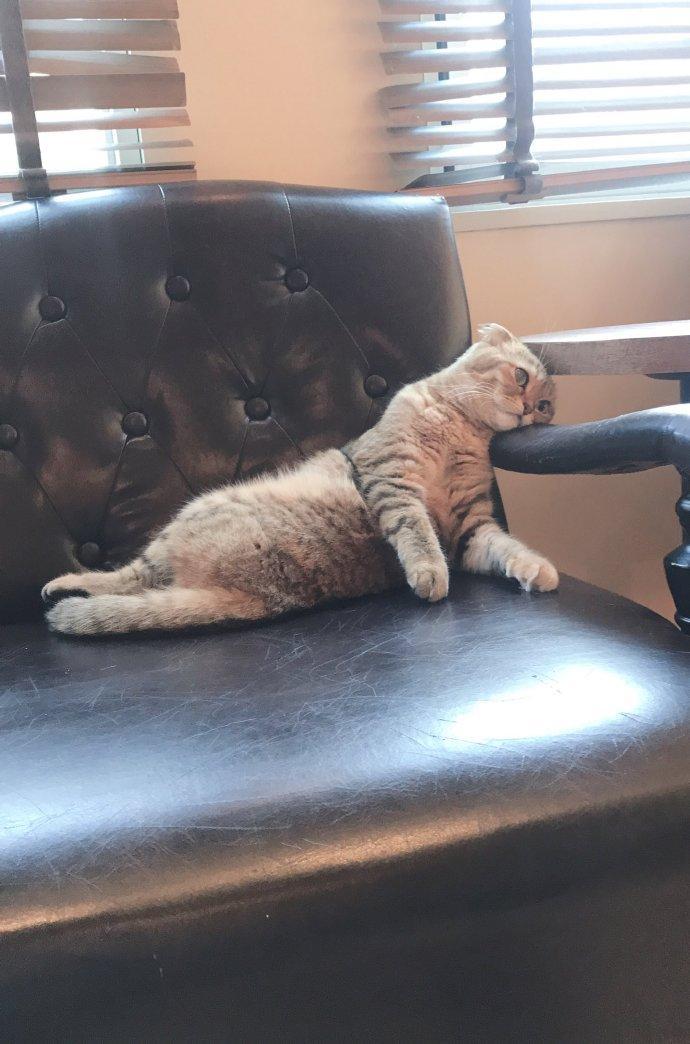 在猫咖工作的猫咪突然怀疑人生:上班好累,好想下班