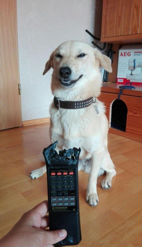"""""""嗯!主人,我同意你的观点,这个遥控器看起来很可疑,我怀疑它是自残"""""""
