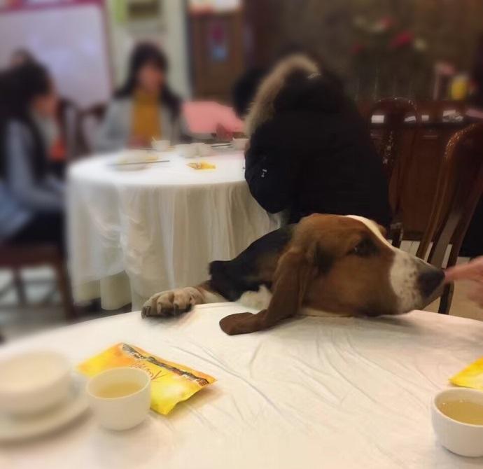 朋友拍的狗,宛如一个在等菜的我。