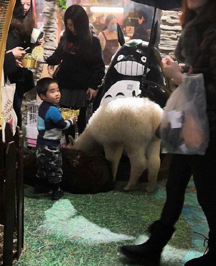 王思聪花四万买羊驼送美女…
