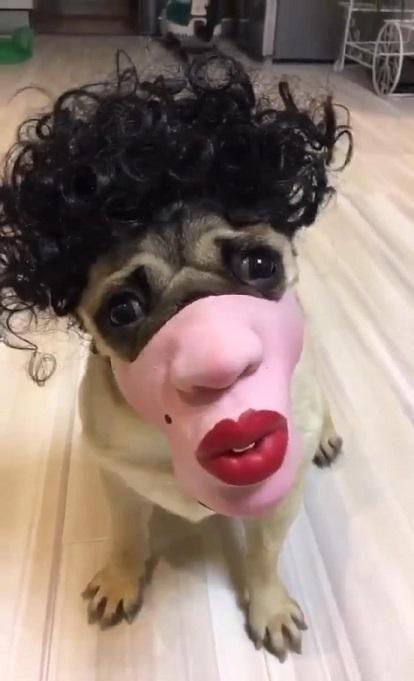 有位网友给她家的狗子买了一个口罩…