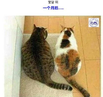 韩国网友家的猫都快胖成猪了,为了让他有羞愧感,快点减肥,就带回一只比他瘦很多的猫,一个月以后。。。